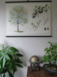 Vintage School Pull Down Charts A Vintage Botanical School Pull Down Chart Of A Plum Tree Paper On Canvas Cz2