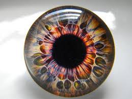 Glass Eyes Brown Eyes Doll Eyes Realistic Eyes Brown