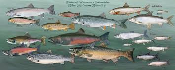 Wisconsins Fish All Of Them Star In New Poster Series