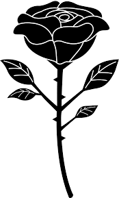 black and white rose with stem drawing images pictures becuo