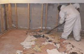 11 ways to remove mold in basement