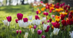 tips for planting a garden in mckinney