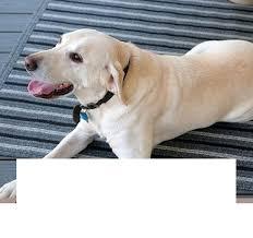 pet friendly rugs large area ultra durable bone