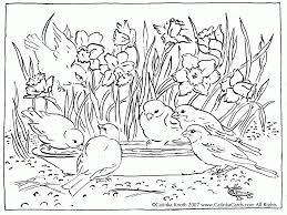 Spring Vacation Coloring Pages With Coloring Pages Birds Coloring