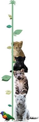 Big Cat Height Chart