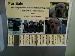 Puppies For Sale Sign From Lobby Of Nicks School Flickr