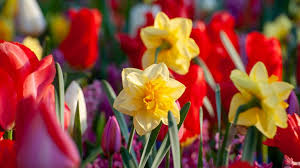 Planting bulbs: follow our top tips on how to get great results with your  spring bulbs | GardeningEtc