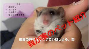 な つく 小動物