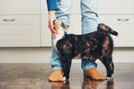 feline hyperthyroid treatment