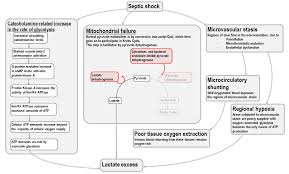 Lactic Acidosis In Sepsis And Septic Shock Deranged Physiology