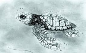 Small Picture Drawn sea turtle graphite pencil Pencil and in color drawn sea