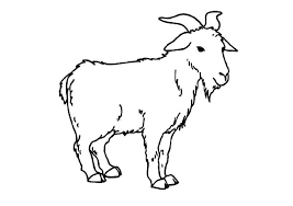 Small Picture Goat is Standing Coloring Pages Color Luna