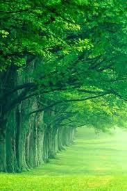 beautiful nature wallpaper hd phone