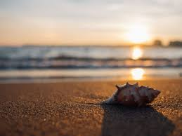 Image result for calm beach