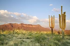 vegetation of the sonoran desert in arizona