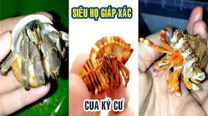 Ốc Mượn Hồn   Loài Sinh Vật Đáng Yêu Sống Trong Vỏ Ốc   Hermit Crab
