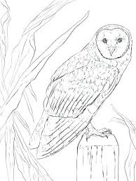 Cute Owl Coloring Page Cute Owl Coloring Pages For Adults Barn Page