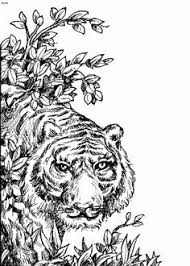 Small Picture Tiger Coloring Pages and Book UniqueColoringPages Coloring