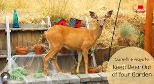 Wildlife Fencing How To Keep Animals Out Of Your Garden  Green Keep Deer Away From Fruit Trees