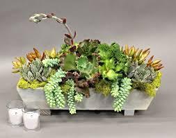 Arrangement of succulents in a rectangular planter