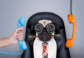 Image result for take your dog to work day 2017