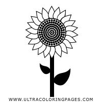 Girasole Disegni Da Colorare Ultra Coloring Pages