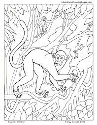 Small Picture monkey coloring pages Animal Coloring Books Pinterest Monkey