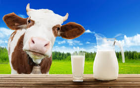 Dricka mjölk vuxen