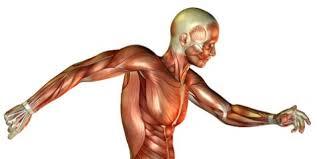 「筋と筋力」の画像検索結果