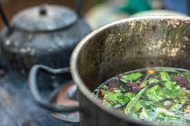 Ayahuasca vs DMT - What's the Difference?