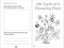 Small Picture 10 Ready to Go Resources for Teaching Life Cycles Really good