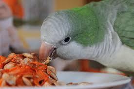 5 best quaker parrot foods pared reviewed
