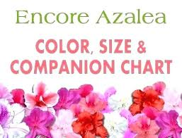 Azalea Size Chart Encore Azalea Colors Wishmagic Co