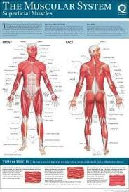 Wall Chart Of Human Anatomy Human Anatomy Wallchart Quad Books 9780857624765