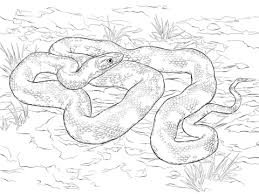 Small Picture Black Rat Snake coloring page Free Printable Coloring Pages
