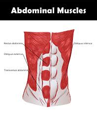 Stomach Muscle Chart Good Abdominal Exercises