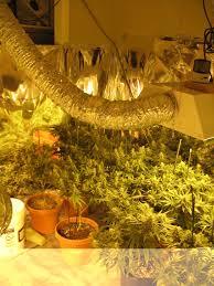 is it legal to grow marijuana
