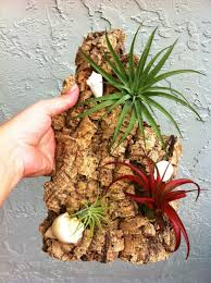 wall mount air plant display idea -1