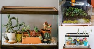 8 diy fish tank planter terrarium ideas