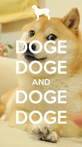 doge wallpaper android. Contemporary Doge HttpdogecointimelinecomDTimages18817dogedogecoin Inside Doge Wallpaper Android