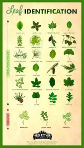 Whether Youre A Curious Hiker Or Nervous Camper Leaf