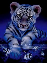 baby white tigers in water. Simple Tigers Babywhitetigerpictures With Baby White Tigers In Water