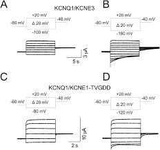 mv 443 form kcne1 and kcne3 modulate kcnq1 channels by affecting different