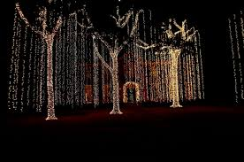 outdoor tree lighting ideas. Http://yourcoolcityblog.com/lights-christmas-action-part- Outdoor Tree Lighting Ideas U