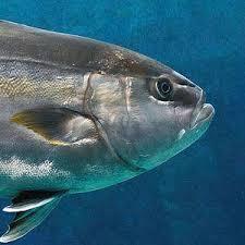 Florida Saltwater Fishing Regulations