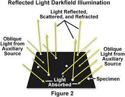 dark field microscopy molecular expressions science optics and you intel play qx3