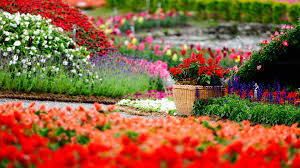 spring flowers park high quality wallpaper
