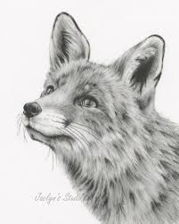 Fox Pencil Drawing Spring Best Home Wallpaper
