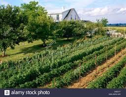 vegetable garden on farm pennsylvania