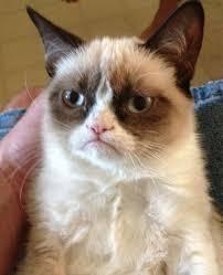 Grumpy Cat Meme Generator - Imgflip via Relatably.com